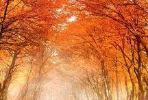 Fall / by Jenn Moore