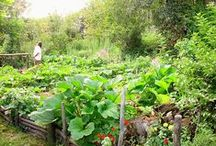 Allotments / Grow your own food / by Jodie's Gardens