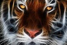 Beautiful Tigers... / by Becca Betts