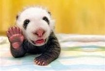 Too stinkin Cute! / by Becca Betts