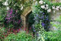 Secret Garden / by Ann Hawf