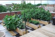 Urban Gardens / Roof tops, balconies and other small spaces that can be used for vegetable and flower gardens. Information on planing and getting started making an urban garden.  Small spaces can produce large crops of vegetables for healthy eating! / by Ann Hawf