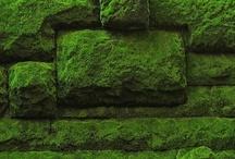 moss / by Knoppen&Taggen