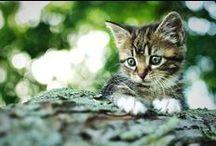 Miau / by Christine