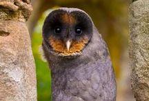 OWLS / by Lindsey Beckler
