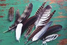 Feather Beauty / by Lindsey Beckler