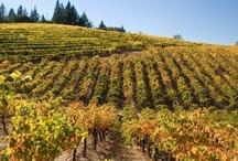 Vineyard Photos / by Geyser Peak Winery