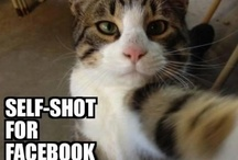 Wow Damn Funny Animal Pictures / by Wow Damn Funny