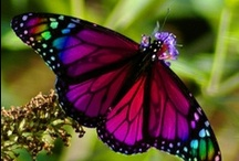 """Flutterbyes and Crawlies / beautiful creatures from the worlds of insects, amphibians, arachnids and reptiles (things my daughter once called """"flutterbyes and crawlies"""") / by Andra W."""