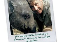 Steve Irwin / One of my favorite people of all time.  He died much too soon. / by Sylvia McPherson