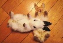 Cute Animals Doing Cute Things / by joanna magda