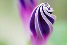 Flower Power / by Michael Viart