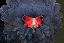 BIRDS / BIRDS / by Claudio Sgaravizzi