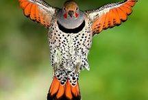 BIRDS / by Mary Dumke