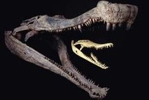 Science: Fossils / by Ulrich