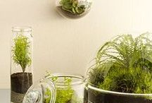 Container Gardening / by Veggie Goddess