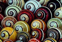 She Sells Seashells / by Monica Gordon