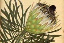 Herbals / by Margaret Crosby
