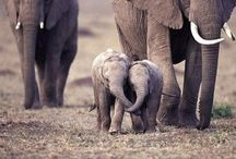 Adorable! / by Shawna Meyer