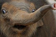 elephants / by Pamela/ Pea Weber