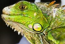 Chameleon / Some of these photos appear to be color  photo shopped  but entertaining none the less... / by Barbara Edwards