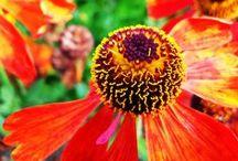 Trädgårdsakademins egna bilder / Här har vi fångat några av våra egna favoriter på bild. / by Trädgårdsakademin