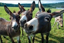 Mule Sightings / by University of Central Missouri