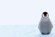 ANIMALS: Tina {hearts} Penguins! / by Tina Gray