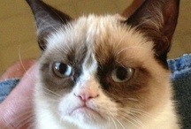 Grumpy cat kills me / by Tina Gray