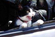 Let's Laugh! :D / by Cate Jeffrey