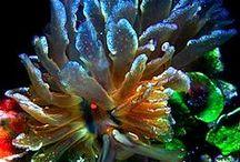 Alien Seaworld / Underwater flora and sea creatures  / by Mitko Nikolov