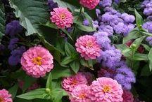 Flowers & Plants / by Terri Wellman