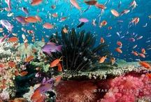 Marine Playground / the sea, the ocean, marine animals and scuba diving / by Tara Sutherland