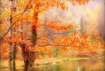 Fall  / by Rose Klein