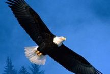 FREEDOM / by Gail Baugniet