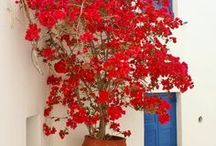 All the Colors of Greece / Relaxing scenes of Greece I will visit in my mind / by Gail Baugniet