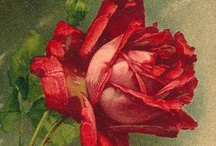 Art Roses / by Gini Paton
