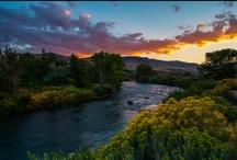 The Truckee River / by Reno Nevada