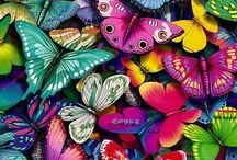 Butterflies & Moths / by Laurie Girtman