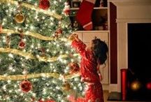 Christmas Trees / Decorated Christmas trees / by D&I Vega
