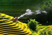 Vietnam / by Anhdao Vo