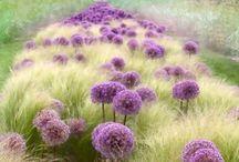 Garden green / by Nožinová Martina