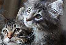 Cats / by Lynn