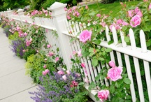Garden Ideas / by ✿•Marilyn•*¨*•.¸¸♥