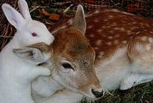 Animals | Interspecies (1) / Love knows no boundaries. Humans could learn a thing or two. / by bonnie goat
