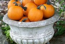 Fall & Other Halloween Haunts / by Jackie McMichael