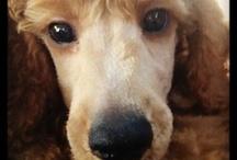 Doggy Ideas / by Anisa - Lazy Homesteader