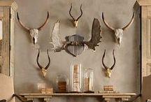 Deer Head Debacle / by Anisa - Lazy Homesteader