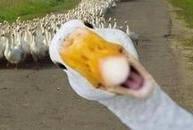 duck duck goose / by deb heather