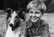 Lassie / by John Ginesi